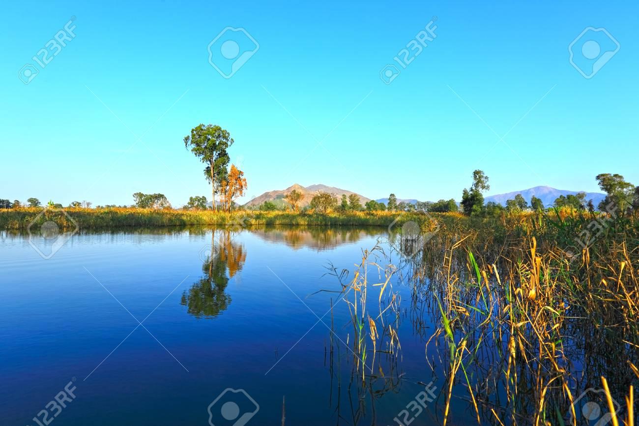 wet land Stock Photo - 11855664