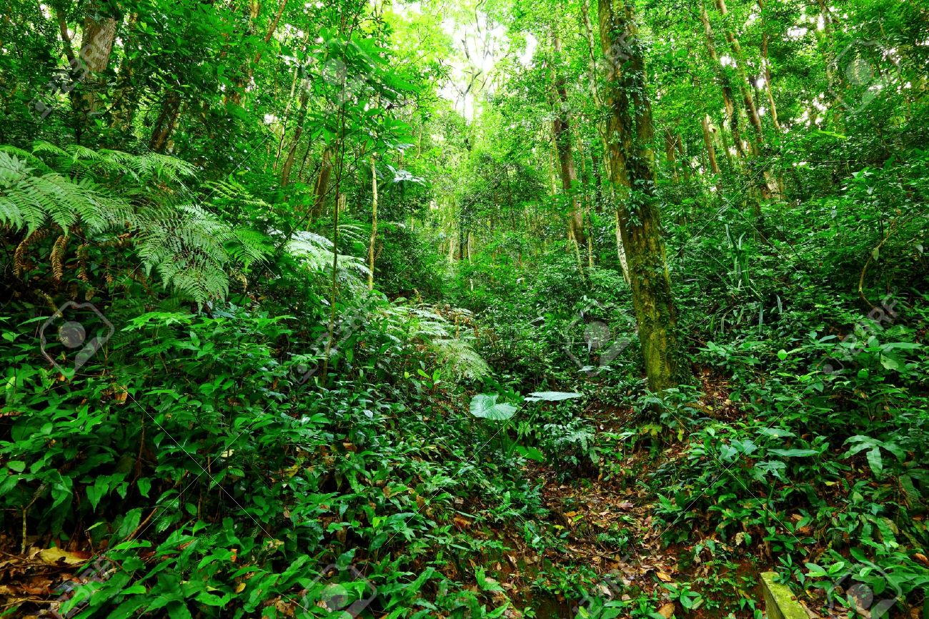 Tropical Rainforest Landscape Stock Photo Picture And Royalty