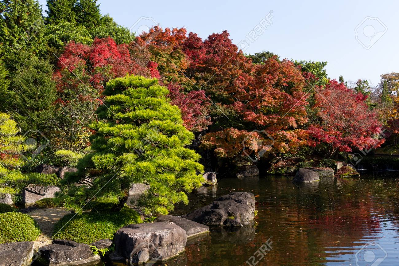 Traditional Kokoen Garden With Maple Tree Stock Photo, Picture And ...