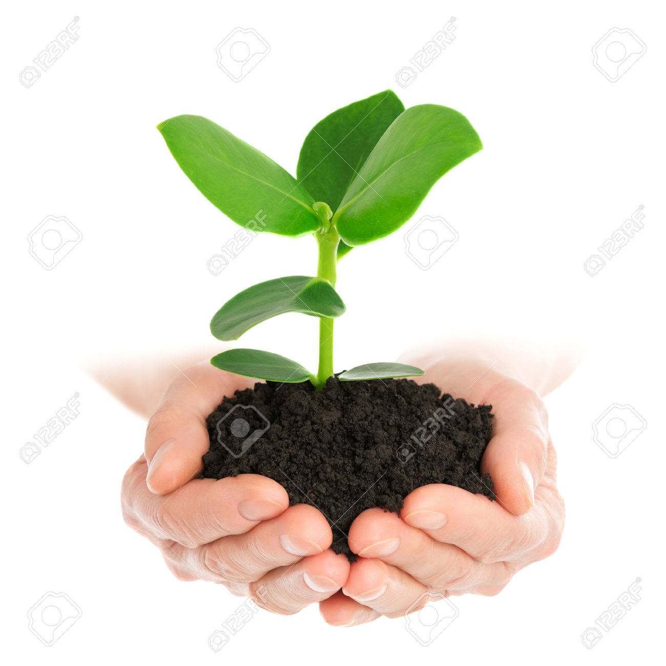 Green plant in hand new life - 41664951