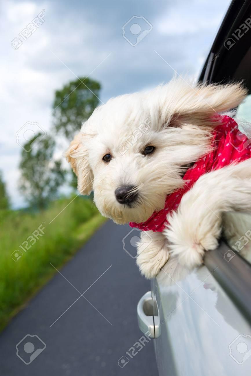 Dog enjoying a ride with the car - 60872838