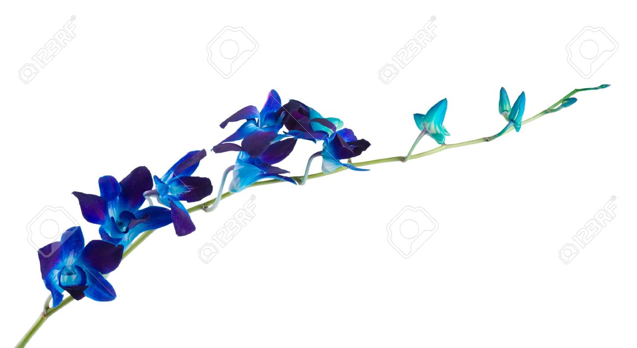 Deep Purple Orchid Isolated On A White Background Stock Photo