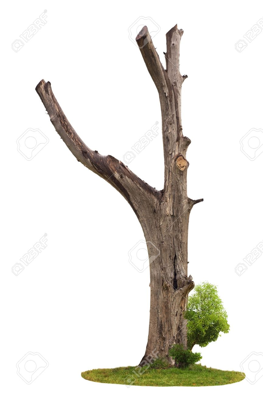 tree branch stock photos royalty free tree branch images and pictures