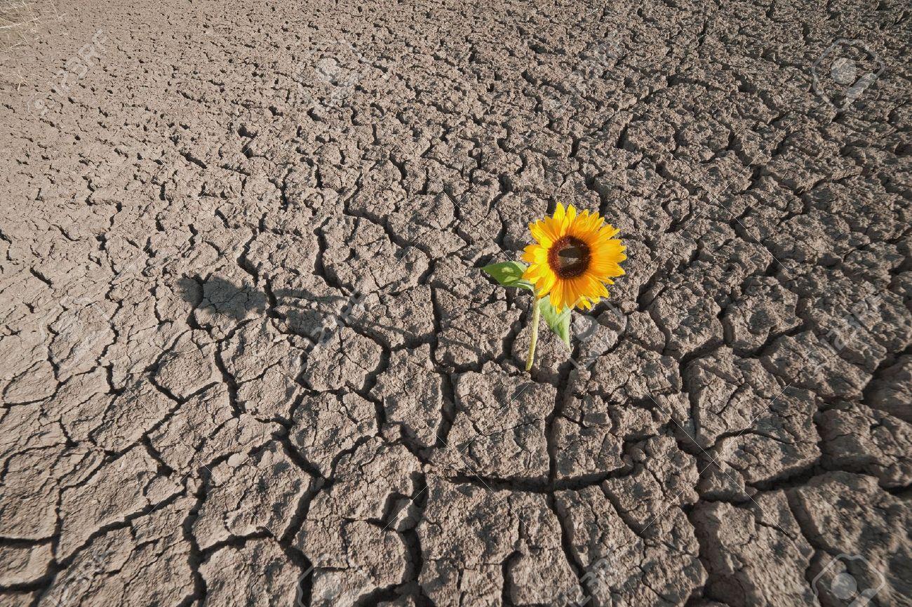 Image result for single flower barren landscape
