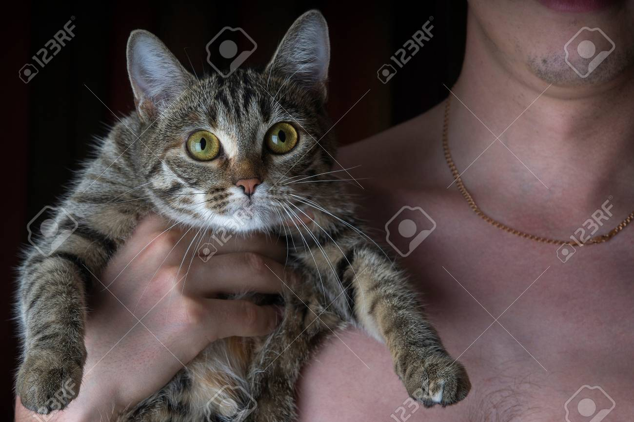 The owner keeps the gray cat in her arms Stock Photo - 21451338