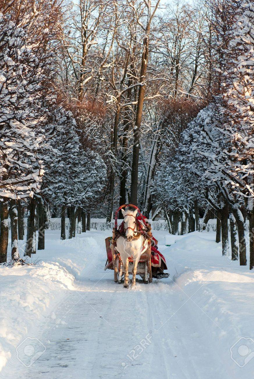 Winter holiday-walk in carriage with white horse Stock Photo - 6356017