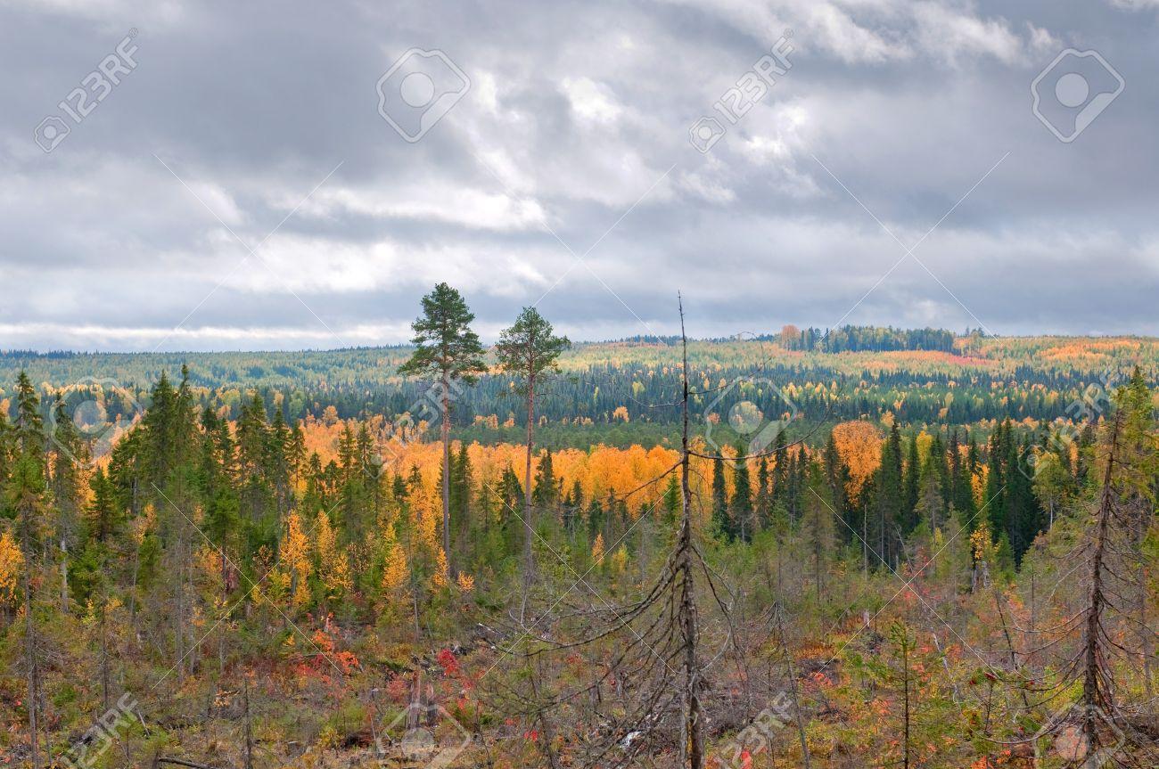 Taiga (boreal Forest) In Komi Region, Northern Russia. Stock Photo ...
