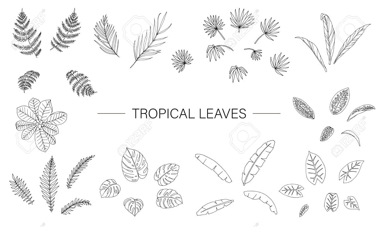 Vector Set Of Tropical Plant Leaves Line Drawing Of Jungle Foliage Royalty Free Cliparts Vectors And Stock Illustration Image 123747490 Try to draw lines as close to each other. vector set of tropical plant leaves line drawing of jungle foliage