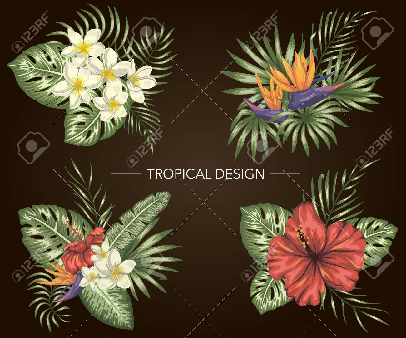 Vector set of tropical compositions with hibiscus, plumeria, strelitzia flowers, monstera and palm leaves on black background. Bright realistic watercolor style exotic design elements. - 123747564