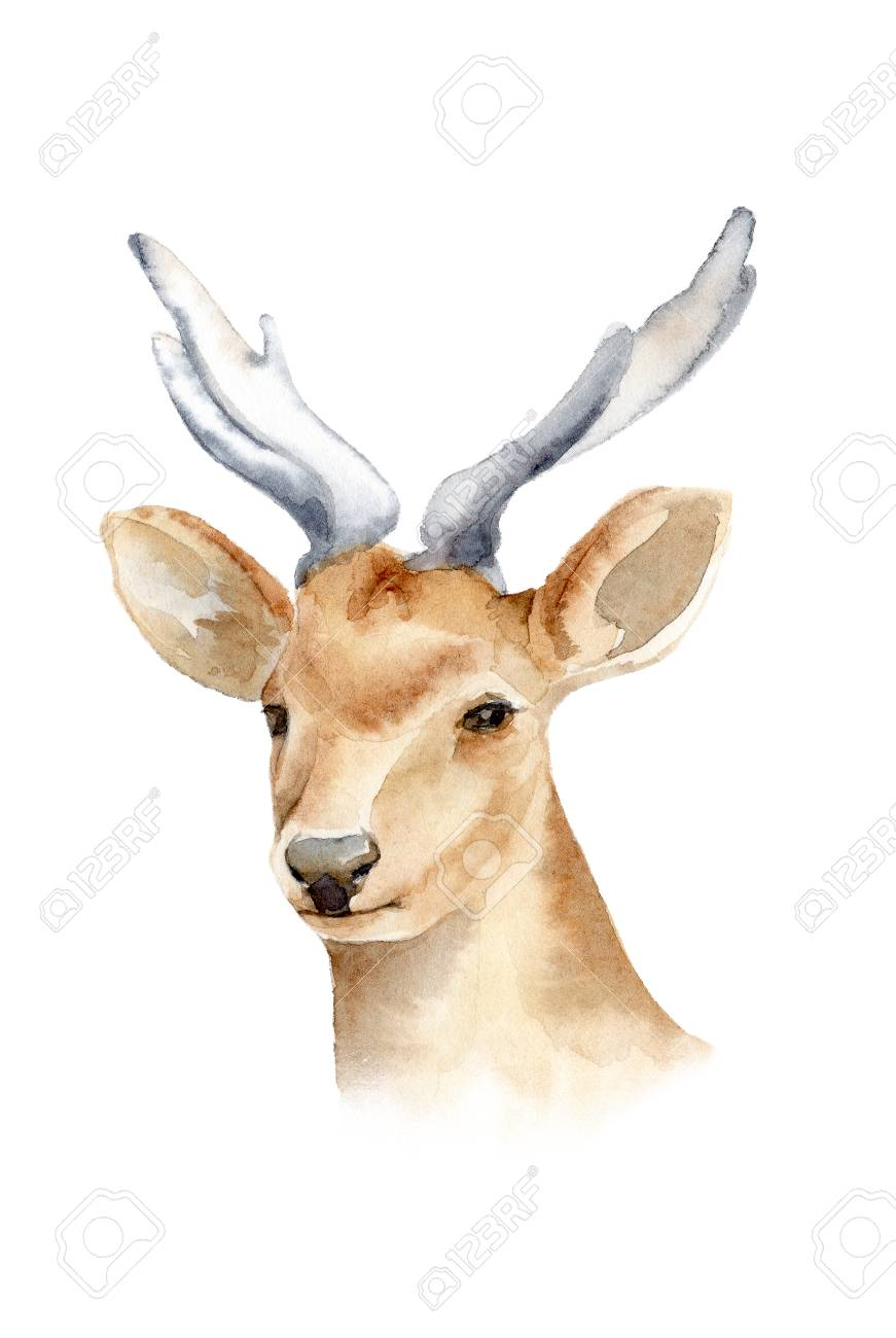 the head of a male deer with horns isolated background boho