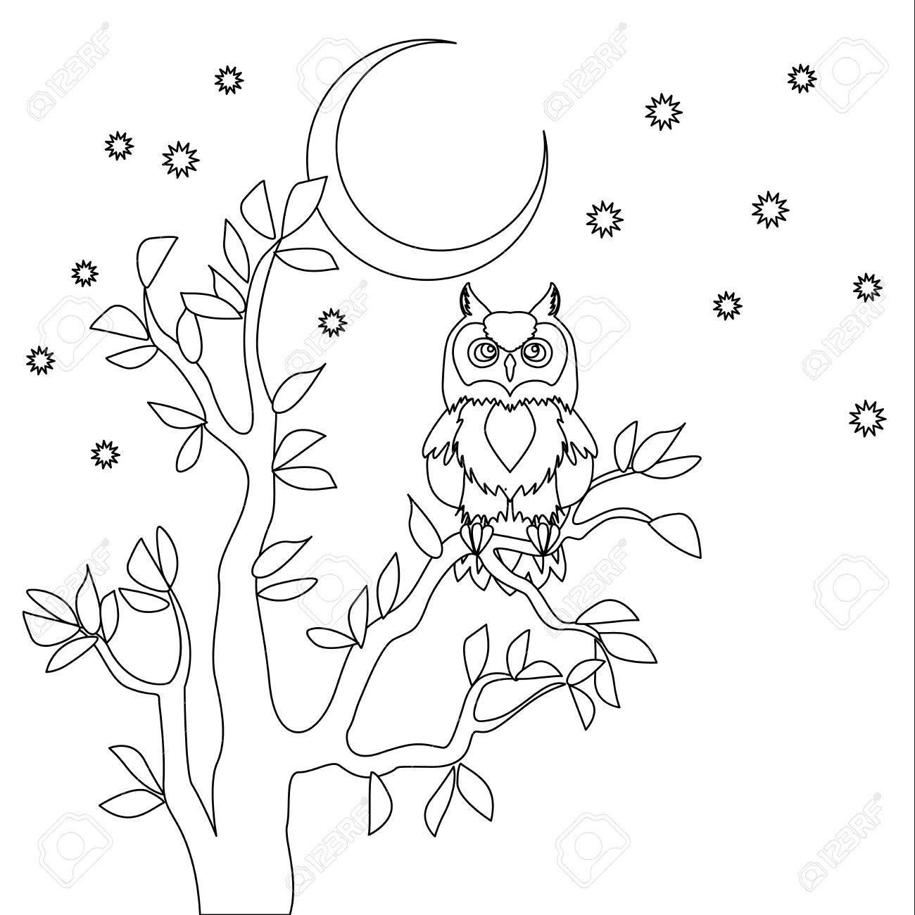Búho Lindo Del Vector. Libro De Colorear. Búho Sentado En El árbol ...