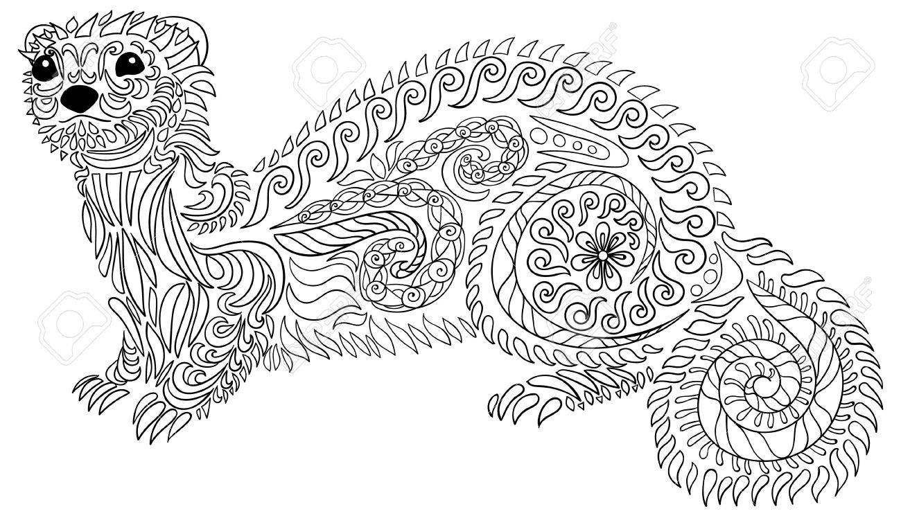 ferret coloring pages.html