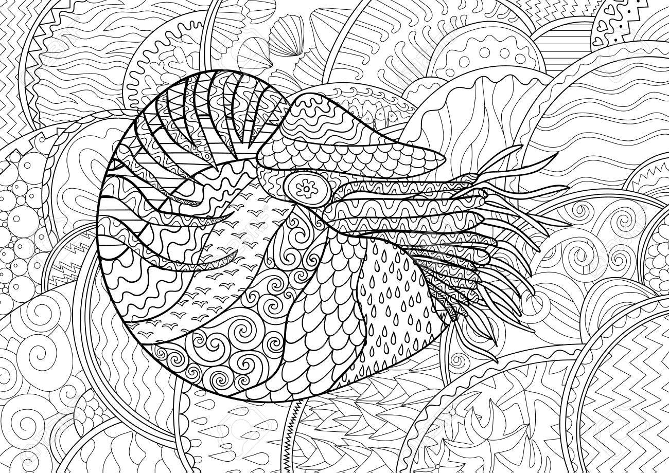 nautilus with high details antistress coloring page black