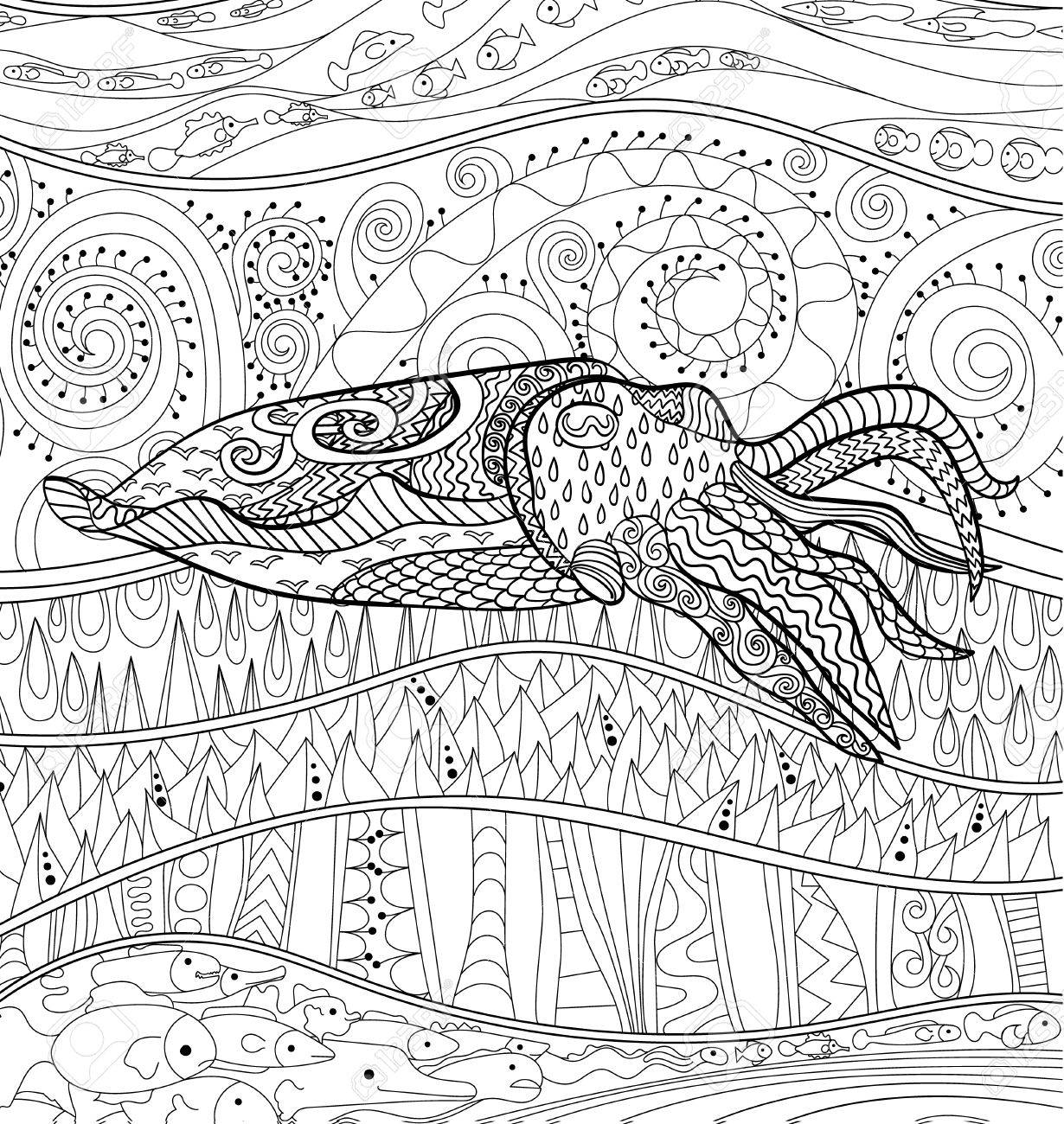 Cuttlefish With High Details Adult Antistress Coloring Page Black White Mollusk For Art Therapy
