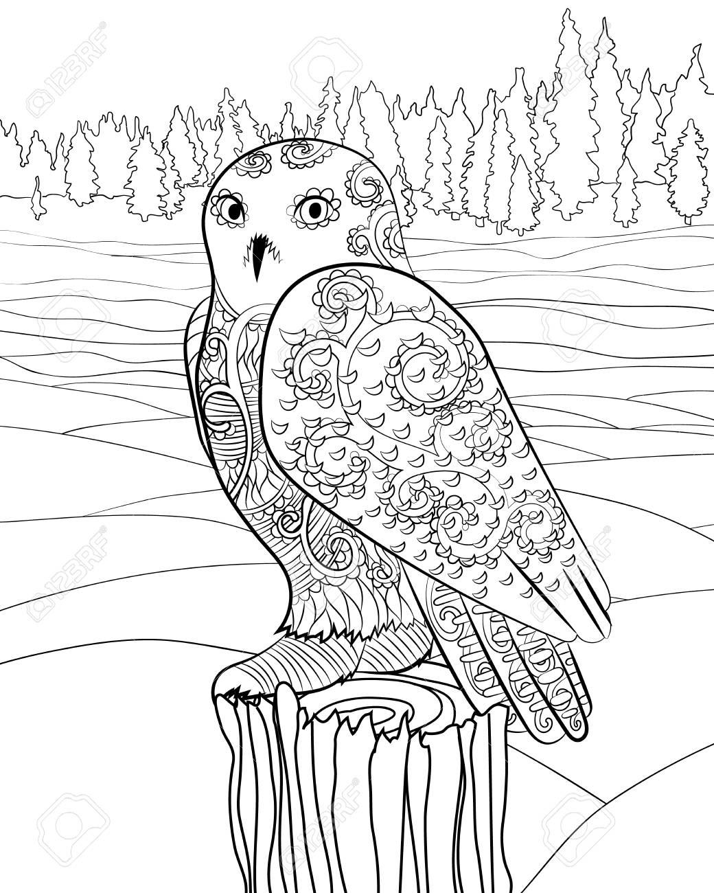 Alta Ilustración Detallada De Un Búho Nival. Página Para Colorear ...