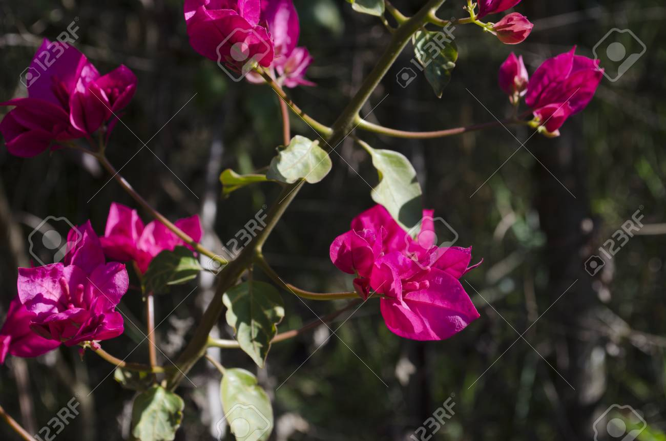 Pinks Flowers In Contrast With Nature Background Stock Photo