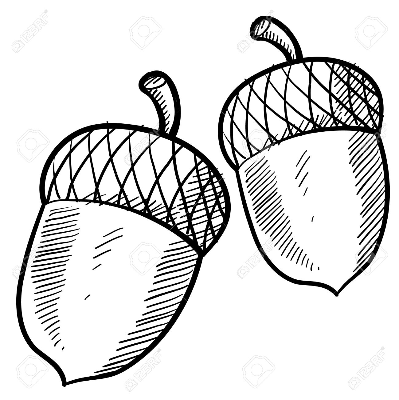 Doodle style acorn or buckeye illustration suitable for web, print, or advertising use. Stock Illustration - 11790107