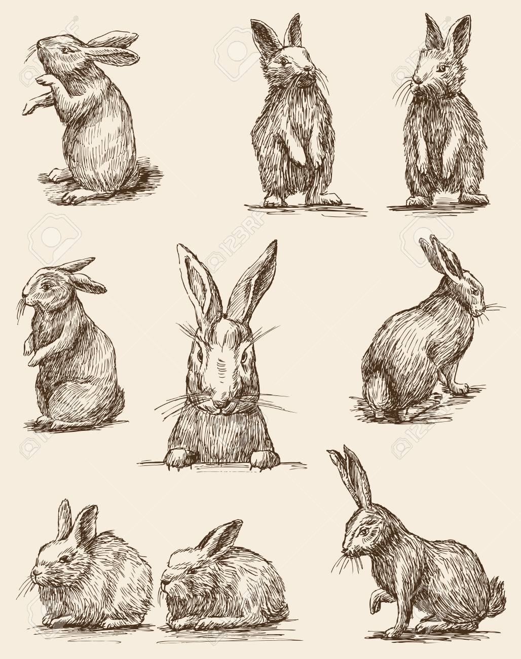 The vector drawings of the different vintage rabbits.