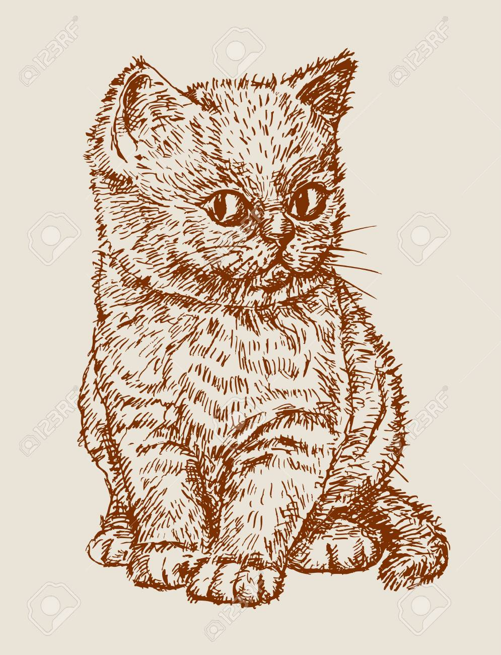 the vector drawing of a cute kitten royalty free cliparts vectors