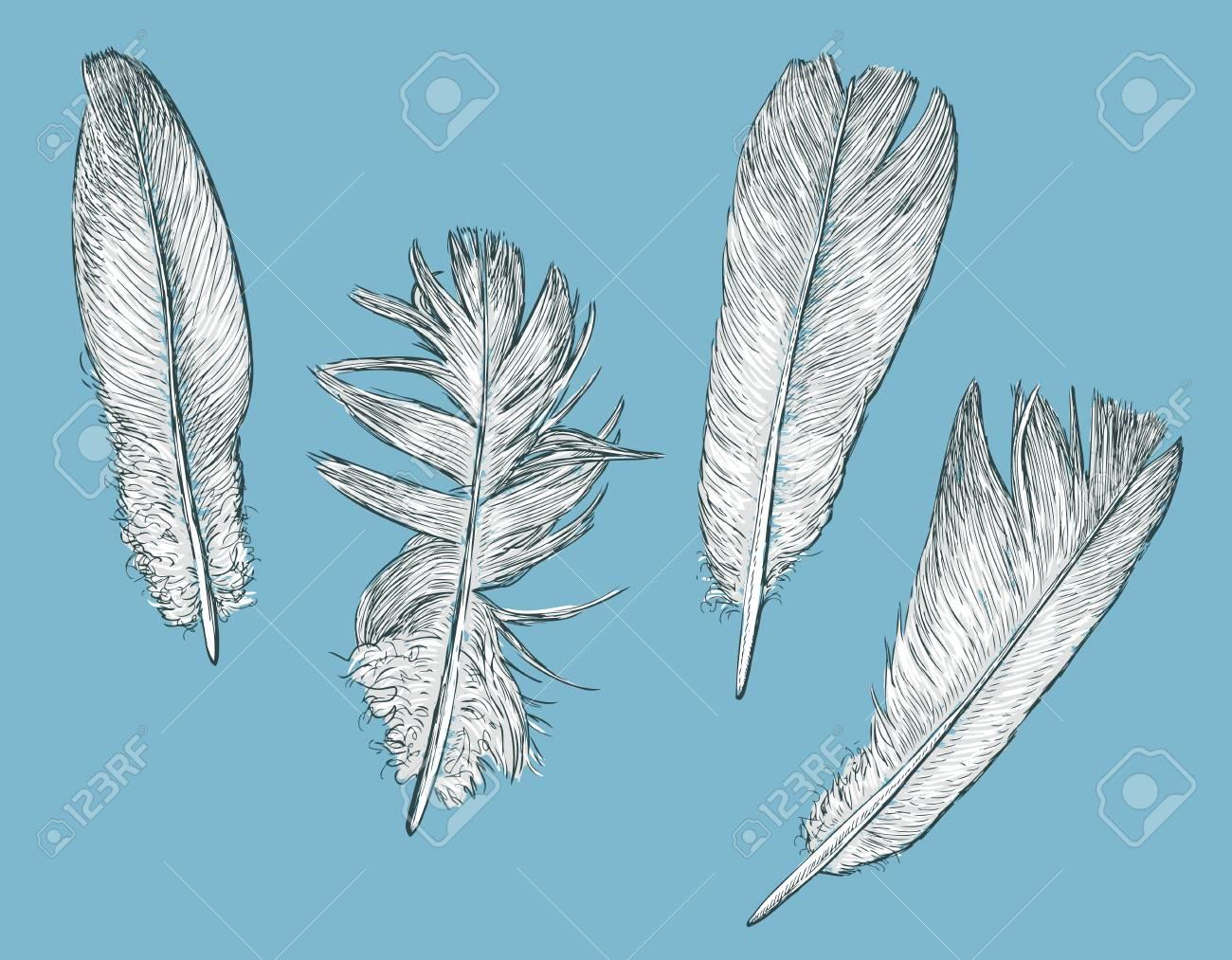 白い鳥の羽のベクトル イラストのイラスト素材ベクタ Image 82660009