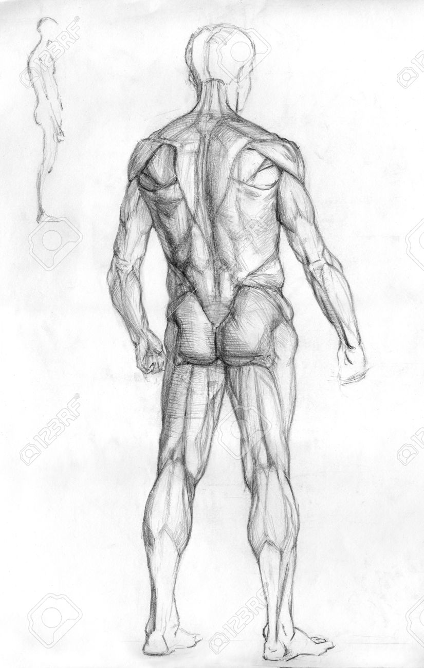 Hand Drawn Pencil Sketch Illustration Of The Male Human Muscle ...