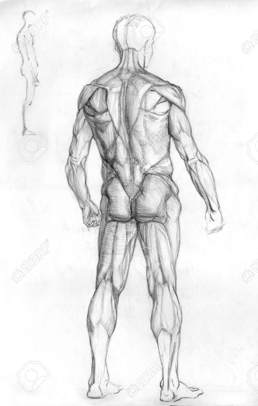 Mano Lápiz Dibujado Ilustración Dibujo De La Anatomía Del Músculo ...