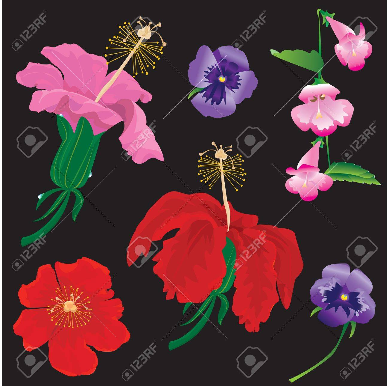 Set of Flowers bloom - hibiscus, violet, convolvulus - on black background Stock Vector - 12199140