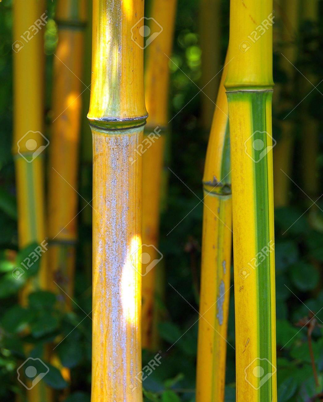 bamboo Stock Photo - 2837533