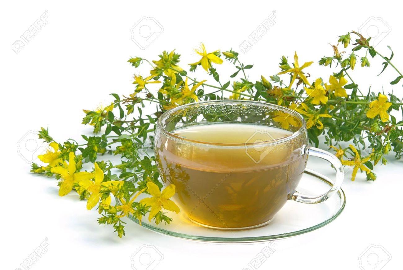 tea St Johns wort 03 Stock Photo - 3625132
