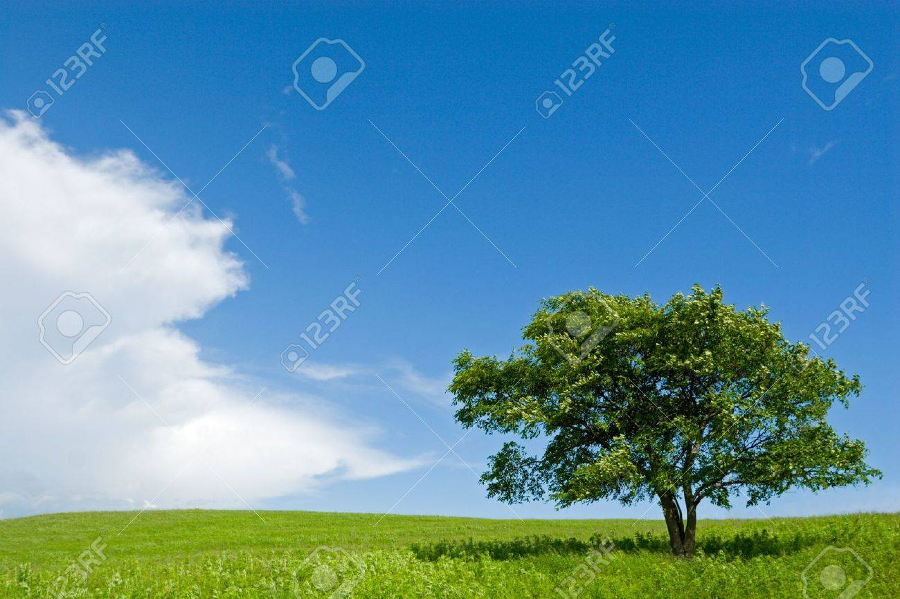 Lonely tree in foothills. Stock Photo - 10516953