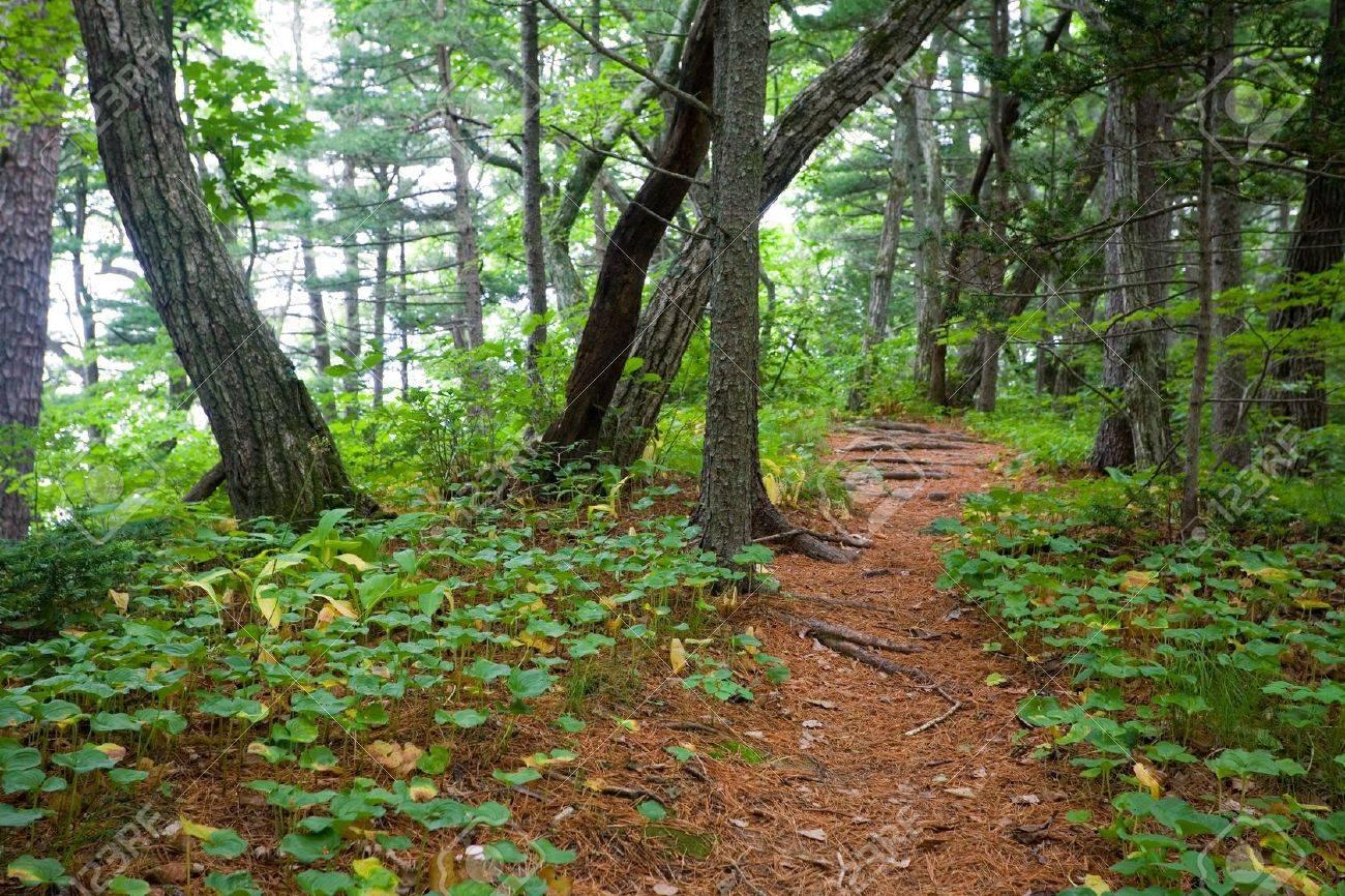 Path on the Petrova island. State Nature Reserve Lazovskiy. Primorsky Kray. Russia. Stock Photo - 10574109