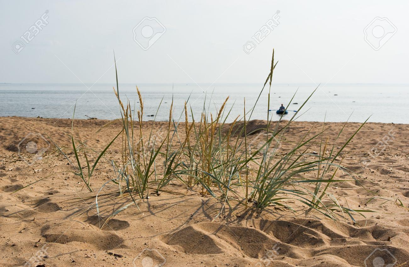 Komarovo beach of Gulf of Finland in Saint-Petersburg suburg, Russia Stock Photo - 18984645