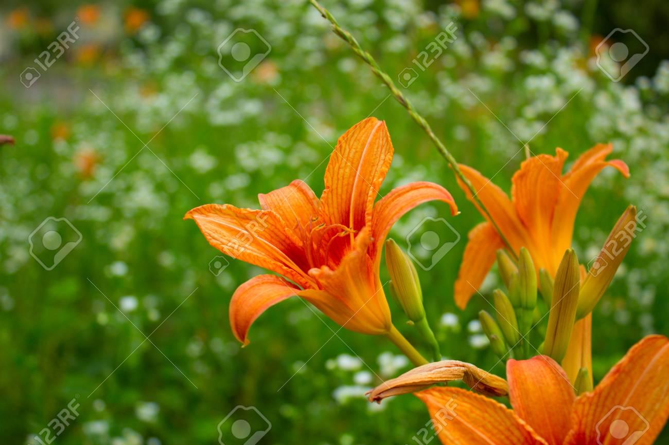 T Jaune Mignon Flower Delicate Fleur Jaune Ete Marguerite Jaune Dans Sunlight Fragile Fleur Jaune Delicat