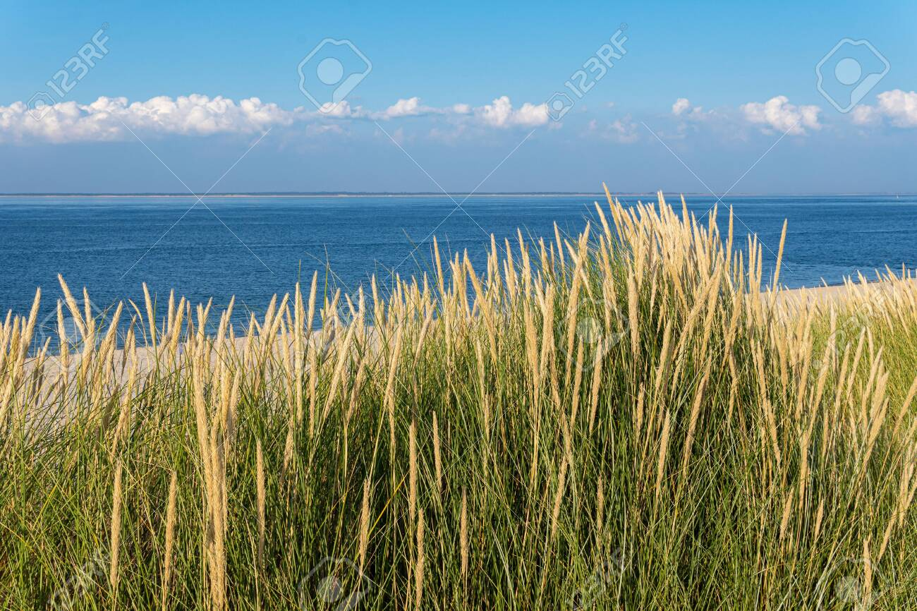 Ocean And Marram Grass On The Island Sylt Germany Stock Photo