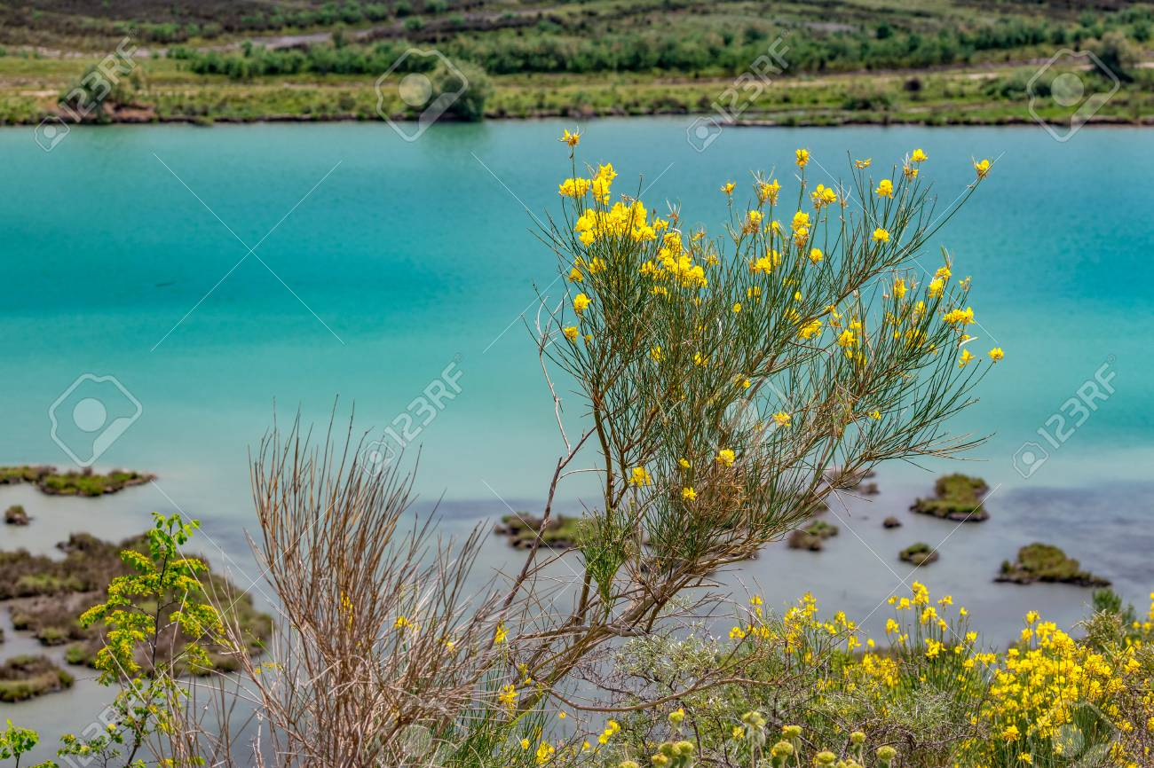 Spring Vivid Colors Landscape With Blossoms Of Yellow Bushes
