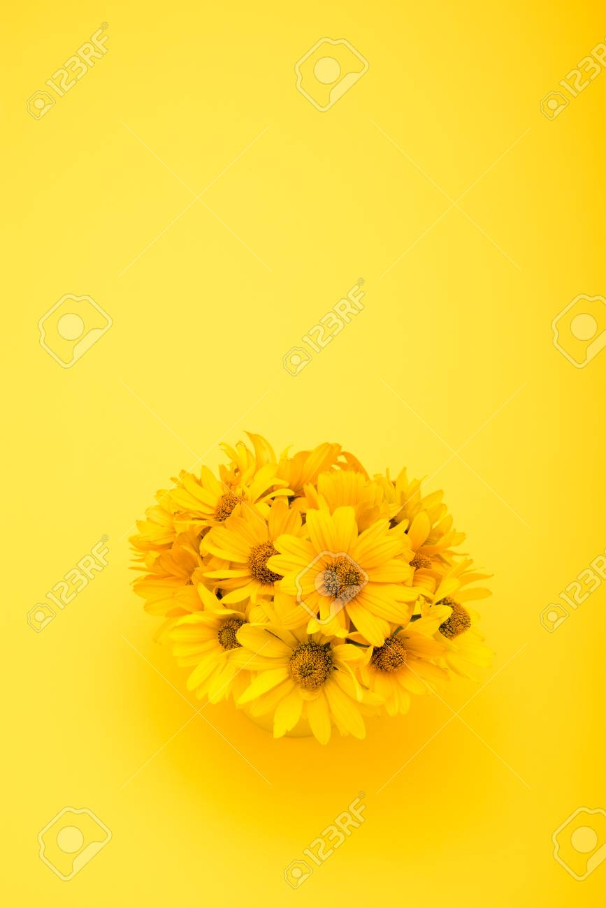 Beautiful Chrysanthemum Flowers Isolated On Yellow Stock Photo