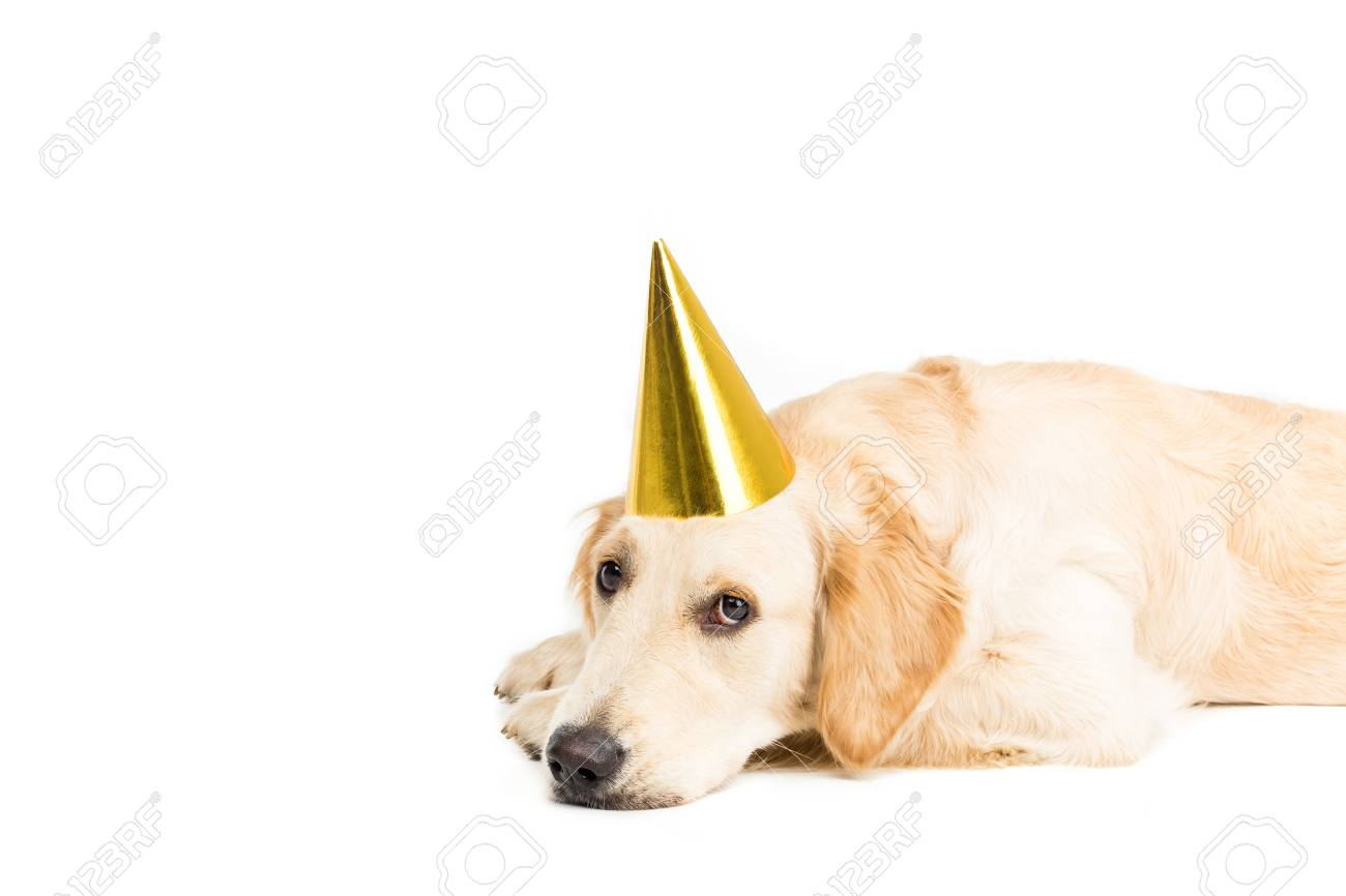 Golden Retriever Dog In Golden Party Hat Isolated On White Stock