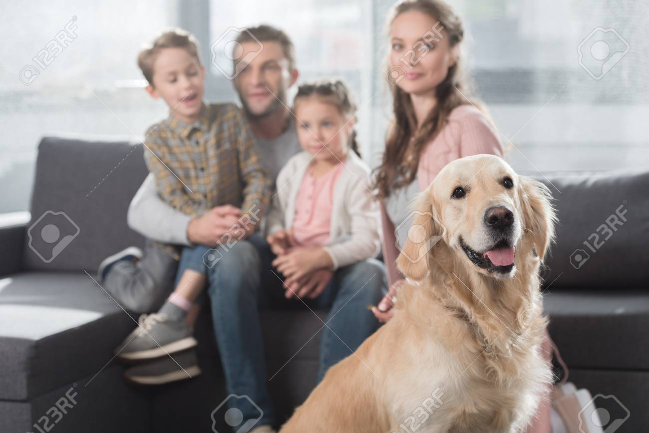 Gold Retriever Sitting On Floor In Living Room While Family Stock
