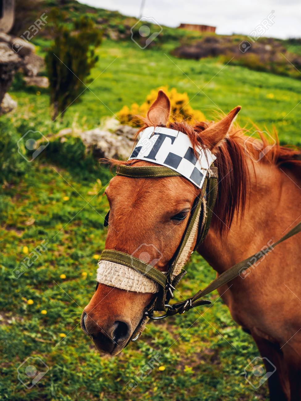 Close Up Shot Of Cute Horse With Taxi Sign On Head Armenia Stock Photo Picture And Royalty Free Image Image 105705045