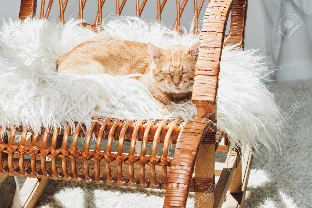 Enjoyable Cute Domestic Ginger Cat Sleeping On Rocking Chair In Living Creativecarmelina Interior Chair Design Creativecarmelinacom