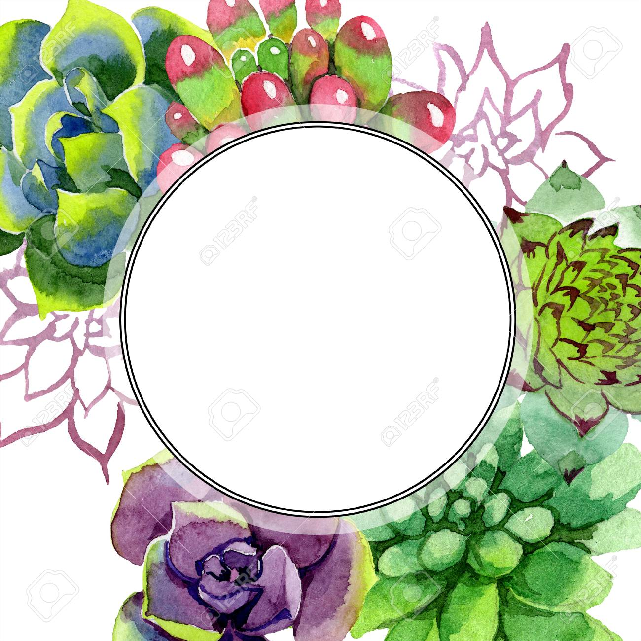 Amazing Succulent Floral Botanical Flower Watercolor Background Stock Photo Picture And Royalty Free Image Image 113293790