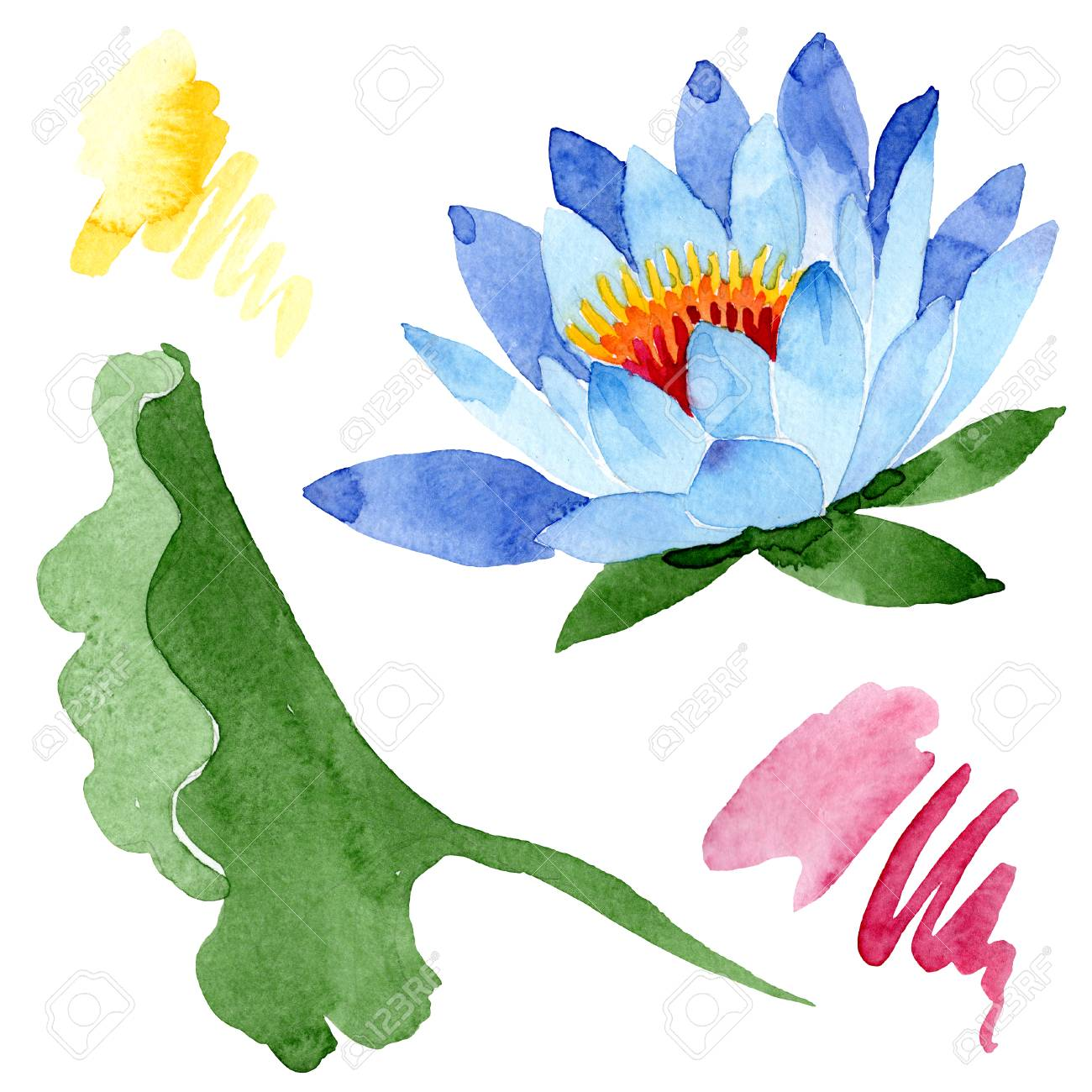 Blue Lotus Floral Botanical Flower Wild Spring Leaf Wildflower