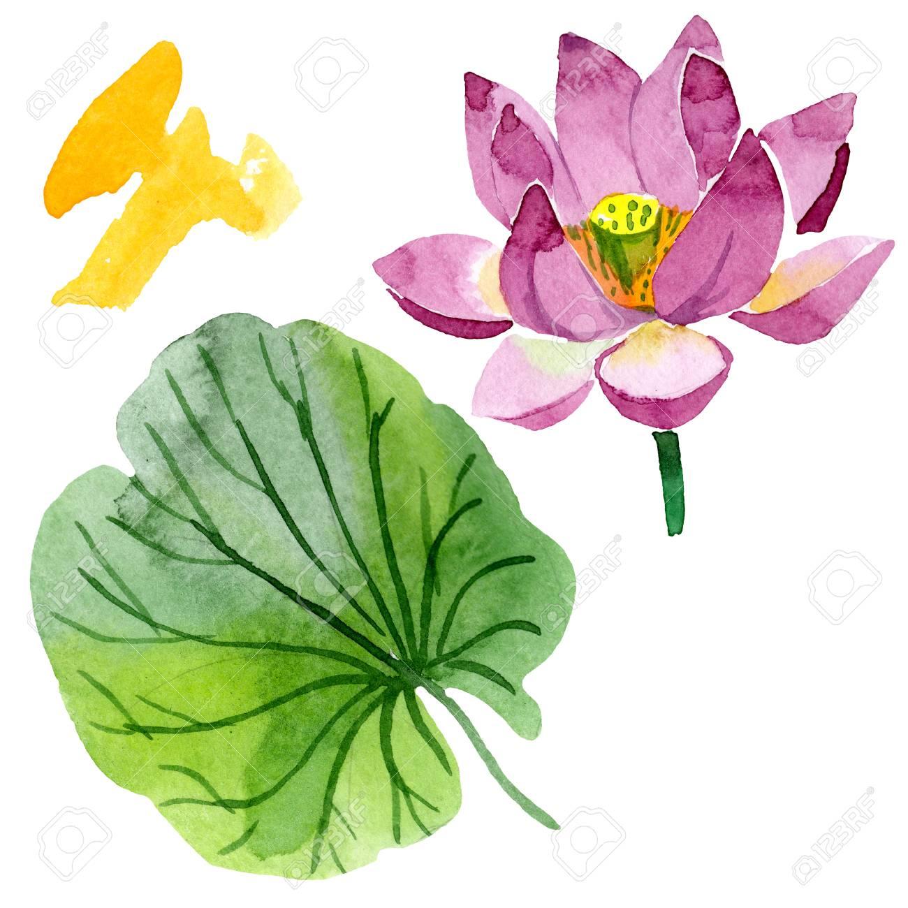 Purple Lotus Floral Botanical Flower Wild Spring Leaf Wildflower
