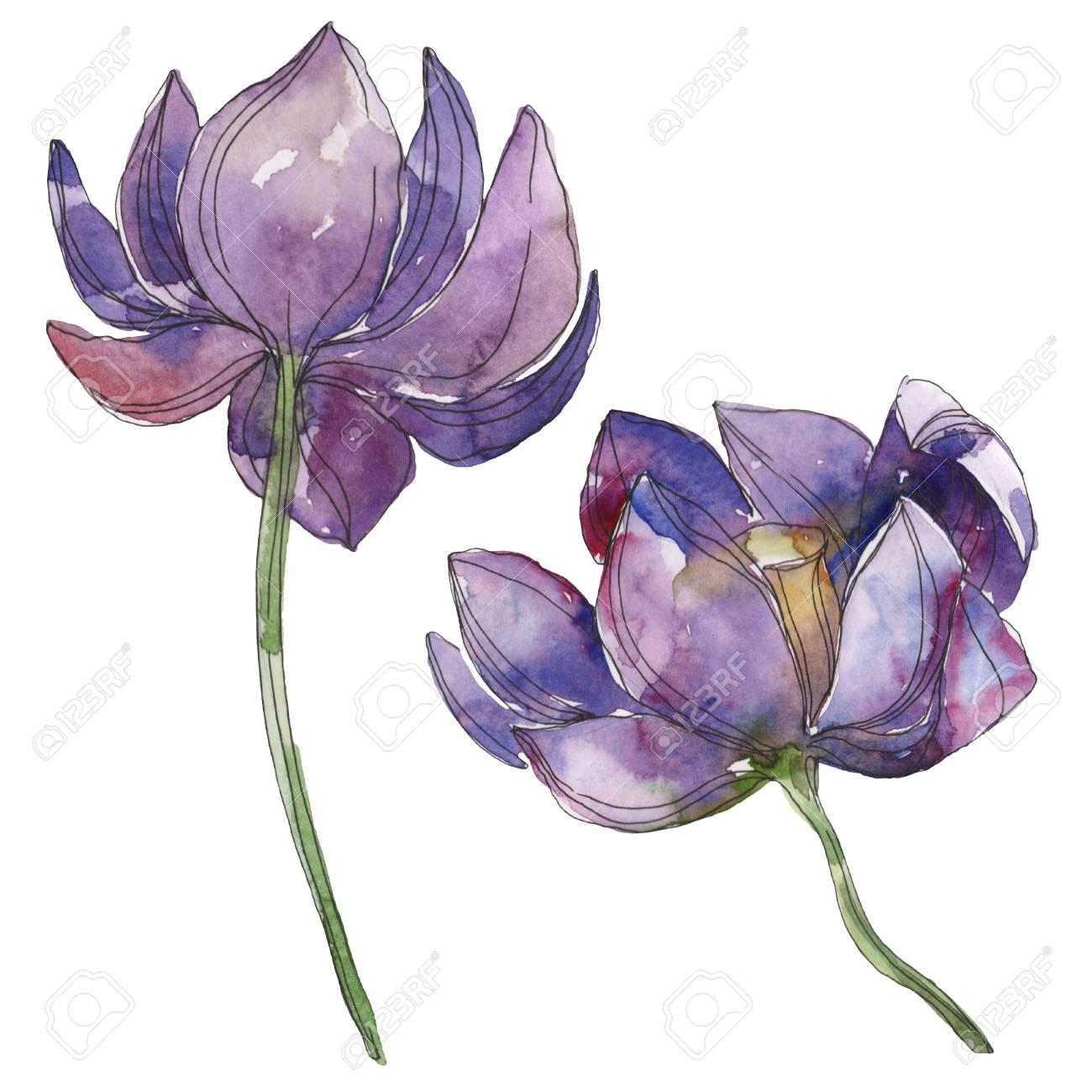 Purple Lotus Foral Botanical Flower Wild Spring Leaf Wildflower