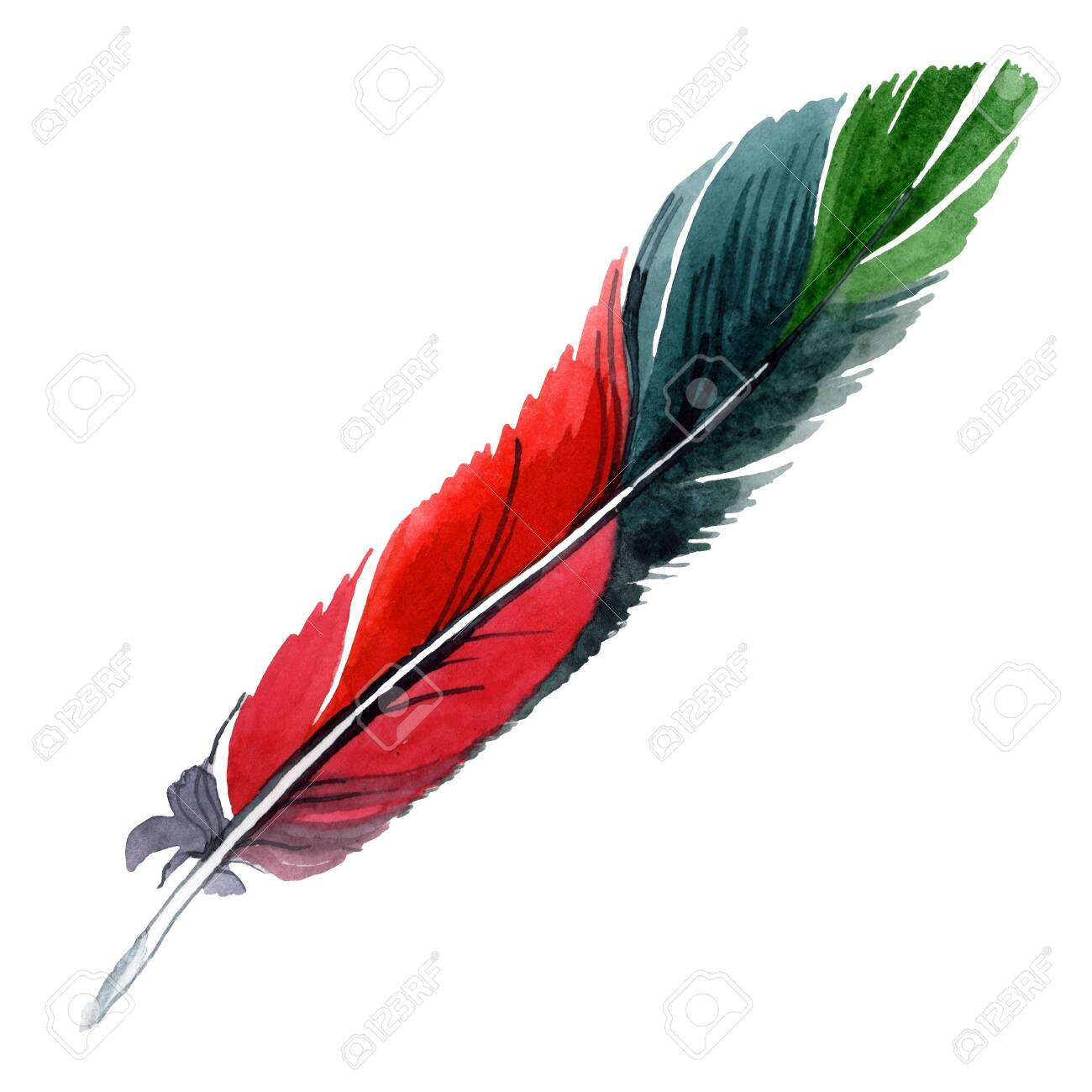 Colorful bird feather from wing isolated. background illustration set. Watercolour drawing fashion aquarelle isolated. Isolated feather illustration element. - 131358243