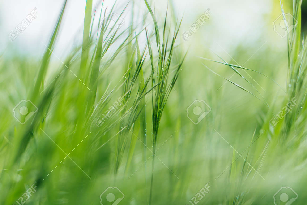 close up of green and fresh grass - 151813903