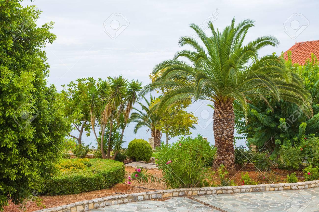 Un Jardin De La Maison A La Vegetation Exotique A Cote De La