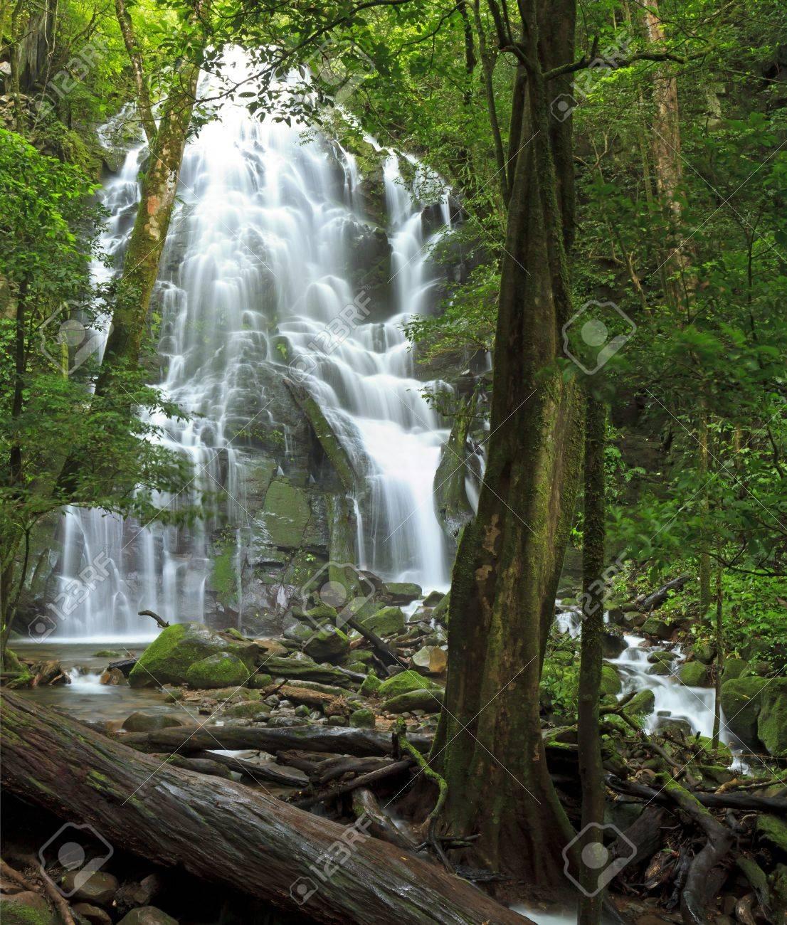 Seasonal waterfall seen through the forest at Rincn de la Vieja National Park - 14126581