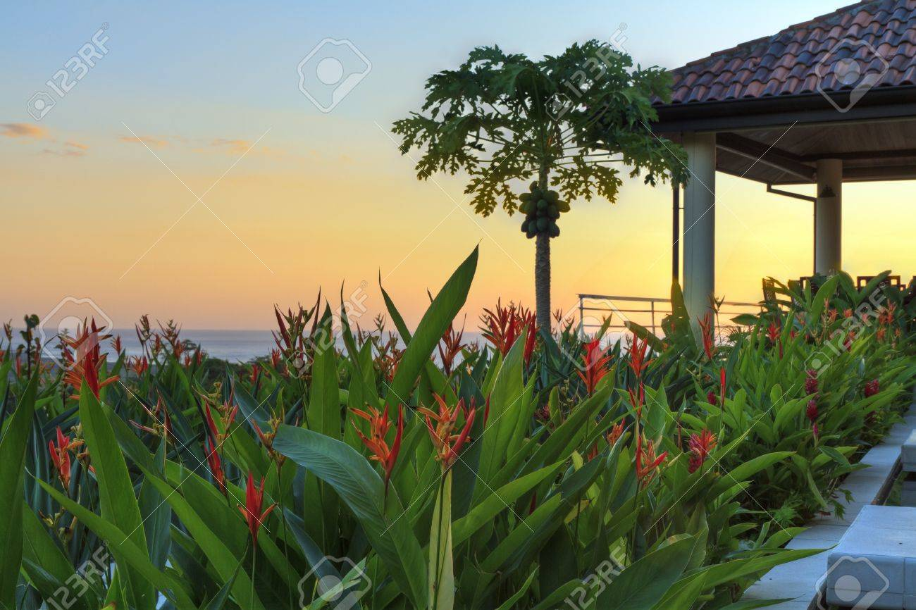 Sunset at a tropical garden and coconut tree in a villa overlooking Tamarindo and Pacific Ocean in Guanacaste, Costa Rica (HDR) - 17316590