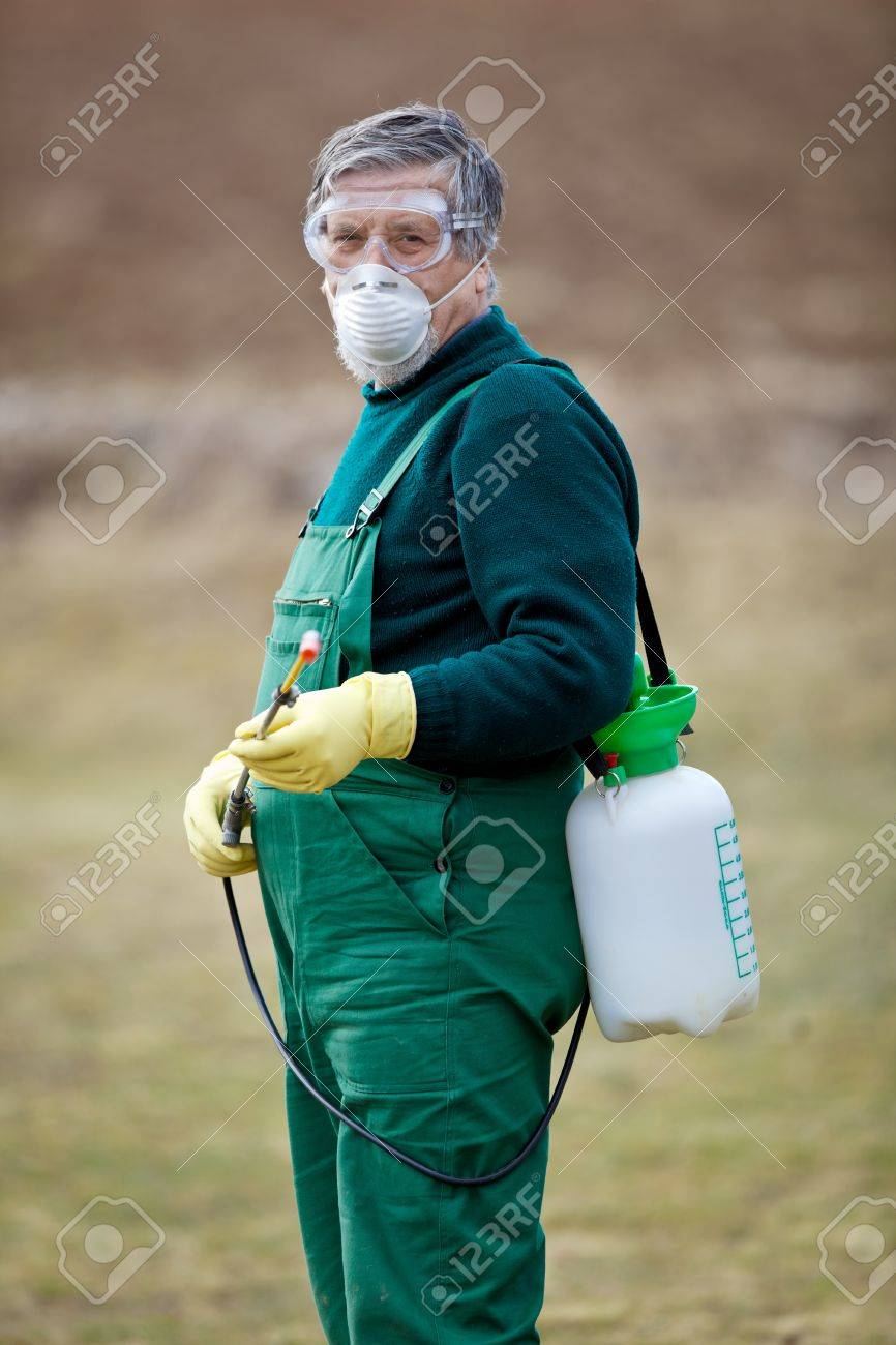 Using chemicals in the garden/orchard: gardener applying an insecticide/a fertilizer to his fruit shrubs, using a sprayer Stock Photo - 12989622